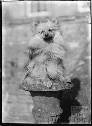 Dog in urn, Batheaston House, 1922 / 1923