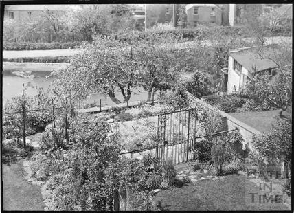 The rear garden of No 31 Sydney Buildings c.1952