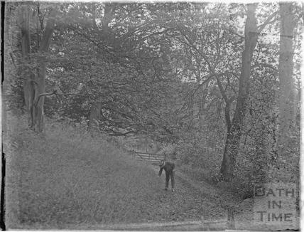 Woodland walk, Bathampton c.1920s