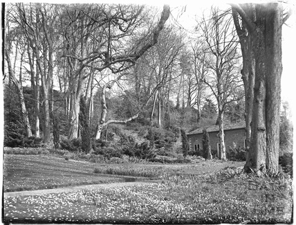 Woodland and Peto Gardens at Iford Manor c.1926