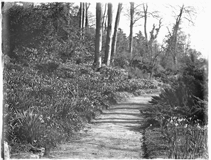Woodland walk at Iford Manor in the spring c.1926