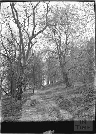 Hampton Woods, Bathampton Down c.1920s