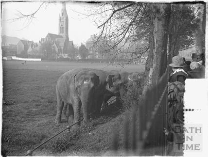 Elephants on the cricket ground! c.1909