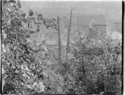 Garden bush, Sydney Buildings c.1920s