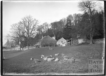 Sheep at The Dell, Widcombe, c.1921