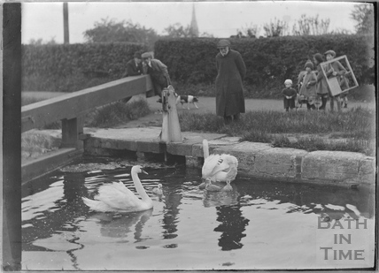 Feeding the swans and cygnets, Kennet and Avon Canal, Bath c.1920