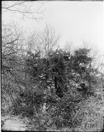 Three smartly dressed gentlemen pose at the top of a tree at Bathampton Rocks c.1905