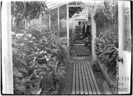 Gardener inside an unknown greenhouse c.1915