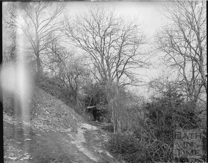 Unidentified woodland scene, possibly Bathampton Rocks c.1905
