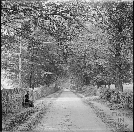 Tree lined lane, Claverton c.1890s