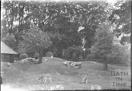 Paynes Zoo and kangaroos c.1920s