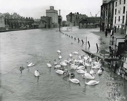 Children feed an eyrar of swans at Broad Quay, July 1968 or 1960?