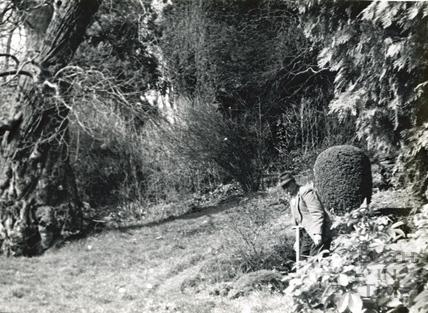 Sidney Godwin, Head Gardener of St Catherines Court, in the garden Dec 1967