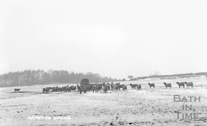 Hampton Downs with sheep in snow c.1908