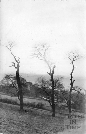 Three dead trees in Bathwick posted 1909