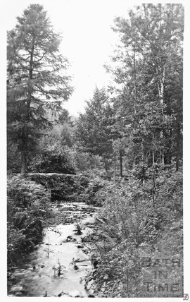 Unidentified woodland scene with stream 1906