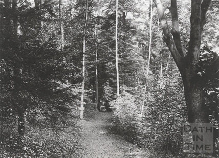 A path in Carrs Wood, in the grounds of Wood House, Twerton c.1903