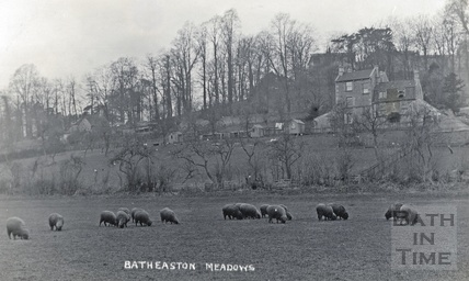 Sheep grazing on Batheaston Meadows with London Road West and Bailbrook House lurking behind in the trees c.1910