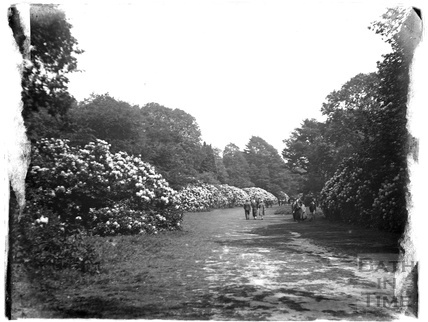 A woodland walk at Stourhead, Stourton, c.1920s