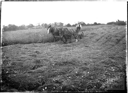 A horse-drawn plough, Leigh on Mendip, Somerset 28 June 1935