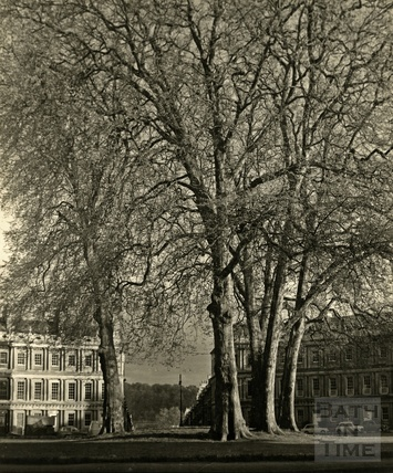 The Plane trees in the centre of The Circus, Bath 1950s