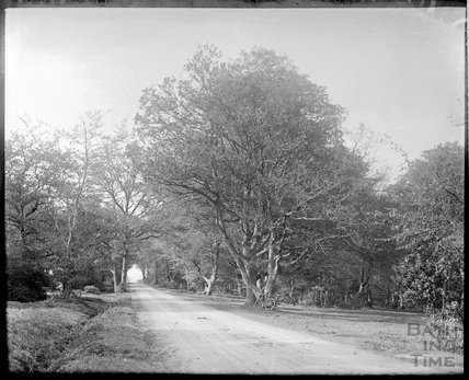 Unidentified lane with trees, c.1910s