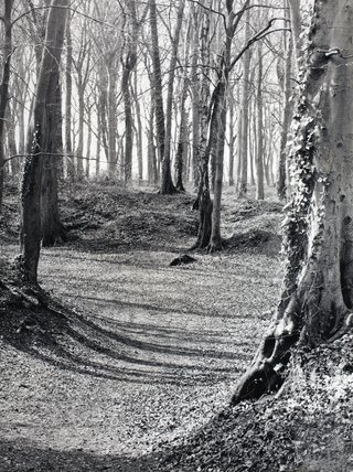 Winter sunshine in Rainbow Woods, March 1988