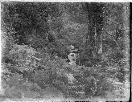 Minehead Wood, 1926