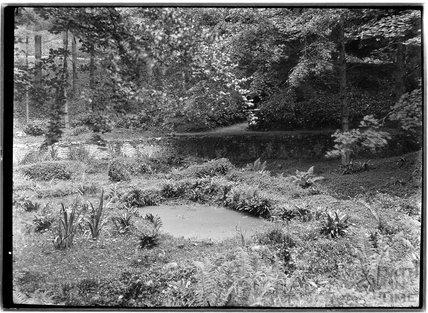 Unidentified woodland scene, c.1930s