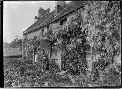 An unknown cottage covered in wisteria, c.1915
