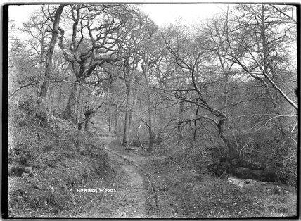 Horner Woods, Horner, near Minehead, Somerset,  c.1905 - 1915