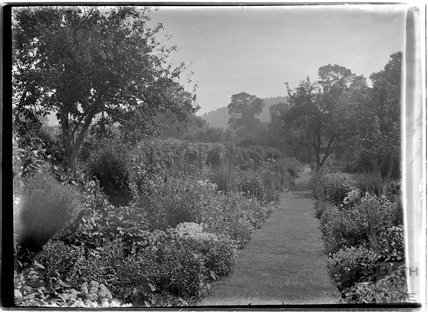Garden in Luccombe near Minehead, Somerset,  c.1905 - 1915