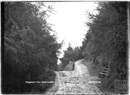 Through the Pinewoods, Minehead, Somerset c.1905 - 1915