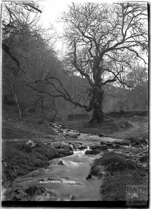Cloutsham Woods, near Minehead, Somerset, c.1920s