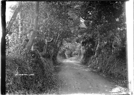 Selworthy Lane, near Minehead, Somerset, c.1912