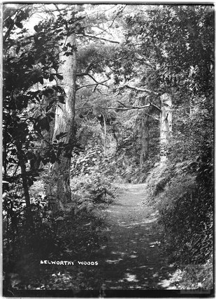 Selworthy Woods, near Minehead, Somerset, c.1912