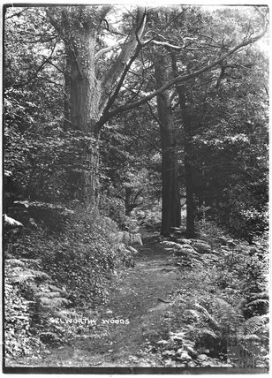 Selworthy Woods, near Minehead, Somerset, 1912