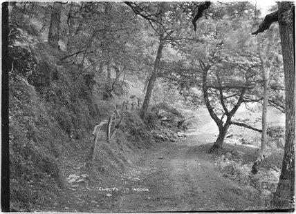 Cloutsham Woods, near Minehead, Somerset, 1909