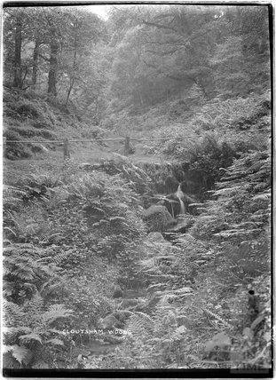 Cloutsham Woods, near Minehead, Somerset, 1909