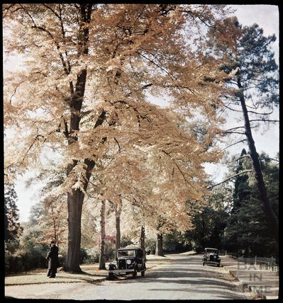Dufaycolor view of the Botanical Gardens, May 1937