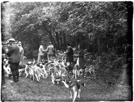 The hunt and hounds, near Minehead 1924