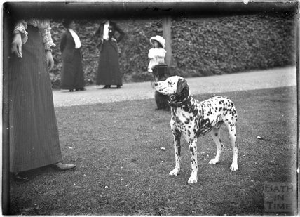The family Dalmatian, Monkton House, Warminster Road, Limpley Stoke c.1910s
