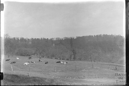 View over a field of cows to a wood, c.1920s