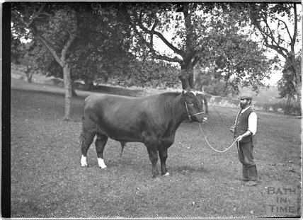 A farmer and his bull, c.1930s