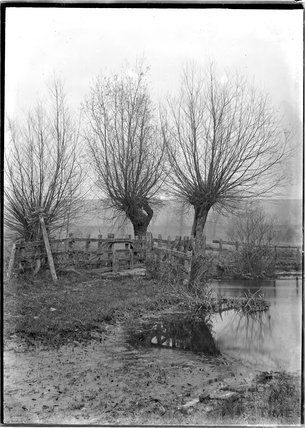 Willows beside an unidentified stretch of river, c.1920s