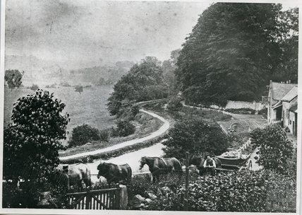 Packhorses on Tucking Mill Lane, beside the Somersetshire Coal Canal, c.1890s