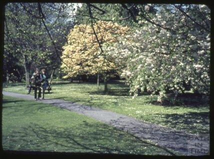 Bath Botanical Gardens, Royal Victoria Park c.1965