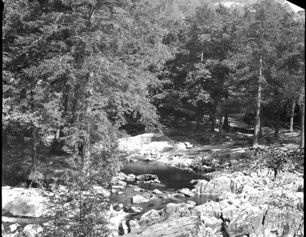 unidentified wooded stream, c.1900s