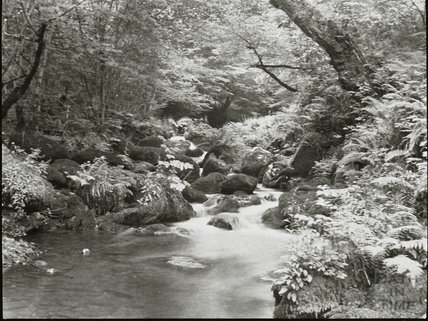 Unidentified stream, possibly Exmoor / Lynmouth area, c.1900s