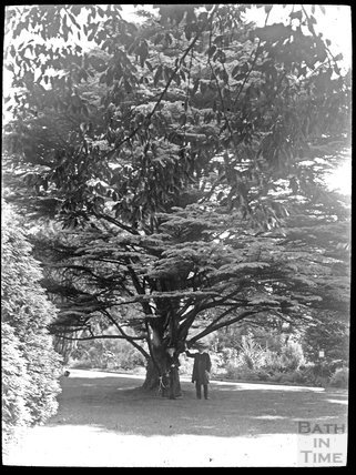 Royal Victoria Park couple under tree, c.1905